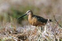 LB DOWITCHER 00-04