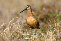 LB DOWITCHER 00-08
