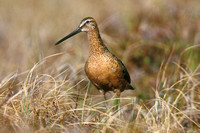 LB DOWITCHER 00-09