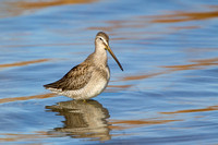 LB DOWITCHER 13-11-1968898