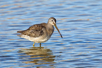 LB DOWITCHER 13-11-1968911