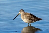 LB DOWITCHER 13-11-1968921
