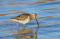 LB DOWITCHER 13-11-1968906