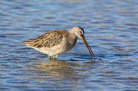 LB DOWITCHER 13-11-1968931
