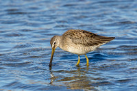 LB DOWITCHER 13-11-1968892